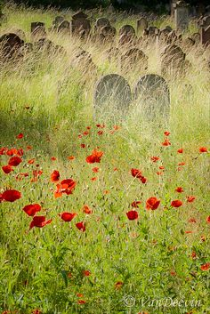 In Flanders Fields: (John McCrae.) World war In Flanders fields the poppies blow Between the crosses, row on row. Monuments, Old Cemeteries, Graveyards, Cemetery Art, Cemetery Statues, Flanders Field, Anzac Day, Just Dream, Remembrance Day
