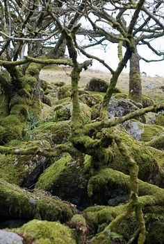 Woodland, Dartmoor
