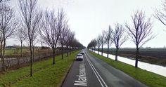 Provincie gaat 1600 iepen langs Markerwaardweg kappen.