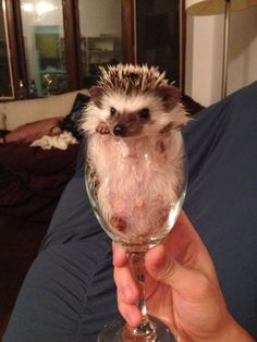 would you like a glass of our finest hedgehog?