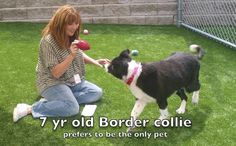 Looking for a smart border collie?  See Lollipop in action ...and lots more at the Cleveland APL this week.  clevelandapl.org