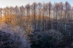 Kultainen aamunkoitto by Lari Huttunen on Landscapes, Snow, Mountains, Nature, Travel, Outdoor, Paisajes, Outdoors, Scenery