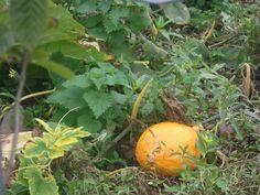 Pam Woods (Gallwwwanders) on Twitter Woods, October, Pumpkin, Autumn, Twitter, Outdoor, Outdoors, Pumpkins, Fall