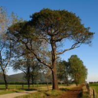 Persea lingue - LINGUE Flora, Plantar, Places To Visit, Forests, Shrubs, Ferns, Palm Trees, Plants