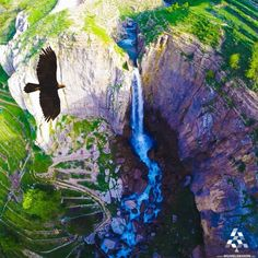 What a masterpiece of nature showing Faraya waterfall and an amazing eagle flying over! By Nino Fenianos #Lebanon #WeAreLebanon