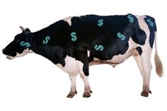 Tax Deductions for Cattle