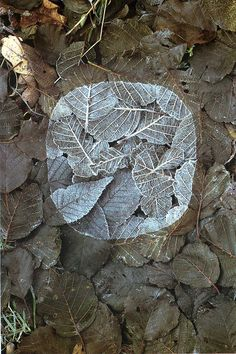 Andy Goldsworthy he spray paints nature in its natural environment to get some very interesting pics