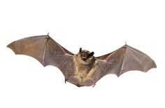 How to get rid of bats in various scenarios? - http://www.pestremovalguide.com/getting-rid-of-bats/
