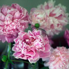 """""""Pink Peonies"""" Ellemoss"""