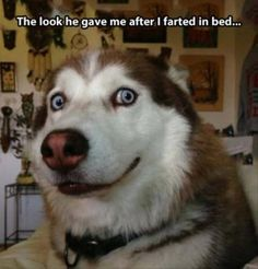 farted in bed