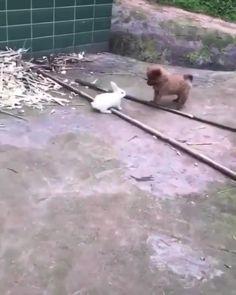 Funny Baby Memes, Funny Animal Jokes, Cute Funny Dogs, Funny Animal Videos, Cute Funny Animals, Funny Babies, Pet Bunny Rabbits, Pet Rabbit, Cute Wild Animals