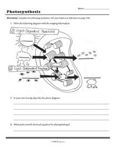 Worksheets Photosynthesis Diagram Worksheet Answers photosynthesis teaching and worksheets on pinterest worksheet