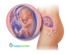 What your baby looks like at 20 weeks @babycenter