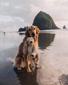 Beautiful Dogs, Animals Beautiful, Beautiful Pictures, Beautiful Life, Simply Beautiful, Beautiful Creatures, Cute Baby Animals, Funny Animals, Animals Sea