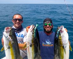 "SPRO BBZ-1 6"" Takes On Yellowtails, Check This Out!"