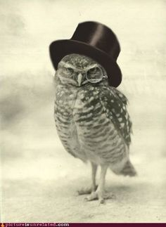Owl wearing a top hat and a monocle.