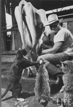 Farm Cats...My Uncle Bud used to feed his cats this way too.