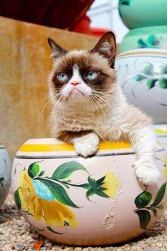 if I fits, I sits !