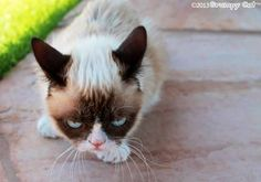 Grumpy cat outside walking