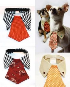 How to make a dog collar out of an old shirt and tie.