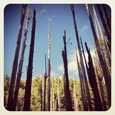 忘憂森林 Wangyou Forest in 南投縣, 南投縣 南投縣鹿谷鄉內湖村興產路12號 http://guide.easytravel.com.tw/scenic/9425