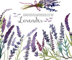 Lavender watercolor clip art by SandraGraphicDesign on @creativemarket