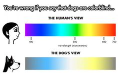The Truth About The Dog's View: this is a good way to show the difference