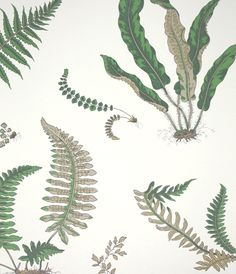 Ferns Green Wallpaper from GP & J Baker Larkhill Wallpapers Collection. A pretty wallpaper featuring a variety of fern leaves in green and earthy tones on a cream background.