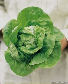 "See the ""Salad Greens"" in our Vegetable Growing Guide gallery. Plant every couple of weeks for a steady supply"