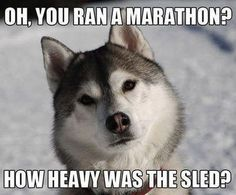 funny husky picture with caption | funny dog meme of a Siberian Husky