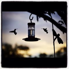 Hummingbirds at my Mommy's house