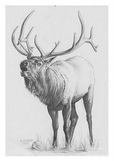 Wildlife Art by Ken Oliver at Coroflot.com