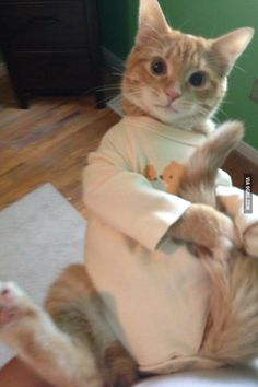Baby pajamas on cat . . .  I can't even imagine trying this on my girls . . .