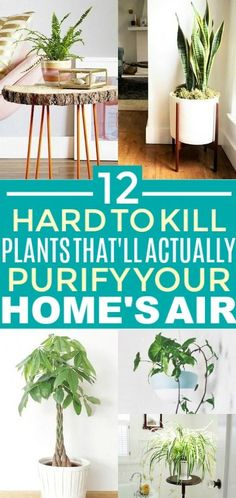 These 12 air purifying plants are THE BEST! I'm so glad I found these AWESOME home hacks! Now I have some great ideas for low maintenance air purifying plants for home decor! Tall Plants, Foliage Plants, Hanging Plants, Indoor Plants, Indoor Flowers, Indoor Garden, Potted Plants, Low Maintenance Plants, Spider Plants