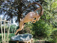 Ibex - Ein Alpensteinbock in vollem Angriff. Kangaroo, Animals, Timber Wood, Art, Animais, Animales, Animaux, Animal, Dieren