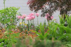 Tulpen und Narzissen starten diesen Garten bunt ins Frühjahr und bekommen später Gesellschaft von Stauden wie Fetthenne. Ein zarter Ahorn bringt zusätzliche Farbe ins Spiel. Bunt, Plants, Daffodils, Shade Perennials, Tulips, Game, Colour, Plant, Planets