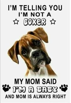 Boxer Dog Puppy, Boxer Breed, Boxer Mom, Boxer And Baby, Brindle Boxer Dogs, Funny Boxer Puppies, White Boxer Dogs, Boxer Dogs Facts, Boxer Bulldog