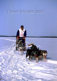 Lapland huskies and sledge