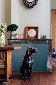 Dog. The interiors of the home of food writer Mimi Thorisson - which she shares with husband, 7 children and 9 dogs. Interior design inspiration from real homes on House & Garden.