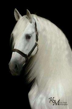 Pasión a los caballos.