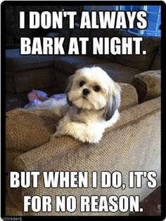 101 Best Funny Dog Memes to Make You Laugh All Day - Funny Dog Quotes - 101 best funny dog memes I don't always bark at night. But when I do it's for no reason. The post 101 Best Funny Dog Memes to Make You Laugh All Day appeared first on Gag Dad. Dog Quotes Funny, Funny Animal Memes, Animal Quotes, Funny Animals, Cute Animals, Funny Memes, Pet Quotes, Animals Dog, Humor Quotes