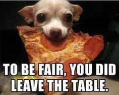 Chihuahua just stole your pizza, lol Cute Chihuahua, Cute Puppies, Cute Dogs, Dogs And Puppies, Doggies, Chihuahua Puppies, 15 Dogs, Funny Animal Pictures, Dog Pictures