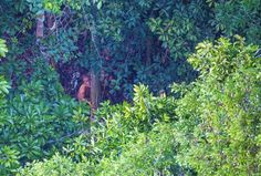"""5   (22.12.2017) Ele estima que a tribo, identificada apenas como """"Índios do Maitá"""", por estar próxima ao rio de mesmo nome, é composta por cerca de 300 pessoas. O número, segundo ele, é bem grande para uma aldeia isolada. Segundo o sertanista, não há nenhum relato ou documento de aproximação dessa tribo com povos civilizados e até mesmo outros grupos."""