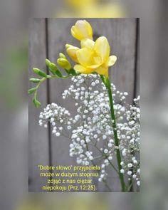 Stowa, Glass Vase, Plants, Decor, Bible, Decoration, Plant, Decorating, Planets