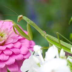 """Beneficial Bugs and Beasties of your back yard"""