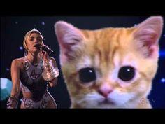 El gato de Miley Cyrus, http://guinaliu.es/el-gato-de-miley-cyrus/