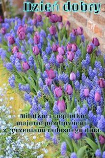 Good Morning, Plants, Night, Buen Dia, Bonjour, Plant, Good Morning Wishes, Planets