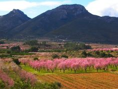 Jalon Valley Walking - Untamed Costa Blanca - Guided Walking Holiday in Spain