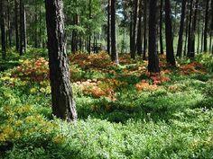 Helsinki, Landscape Architecture, Avon, The Good Place, Amazing, Places, Image, Garden Ideas, Zero