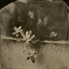 """4x4"""" Wet Plate Collodion Tintype by Angie Brockey 2015"""